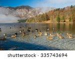 Photo Of Herd Of Wild Ducks...