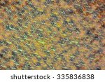 image of the abstract colorful