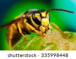 Colorful Detailed Macro Of A...