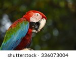 poultry is a family psittacidae ...   Shutterstock . vector #336073004