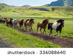 Icelandic Horses Galloping Down ...