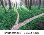 Bifurcation Of A Path In Forrest