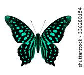 beautiful pale green butterfly  ... | Shutterstock . vector #336280154