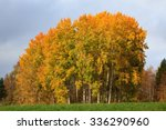 Landscape Field Trees Autumn...