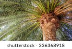 magnificent crown of west... | Shutterstock . vector #336368918