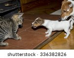 Stock photo small terrier playing with kittens 336382826