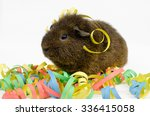 Small photo of celebrater...rex guinea pig