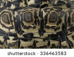 Stock photo close up of shell of a leopard tortoise 336463583