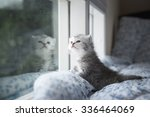 Stock photo cute tabby kitten sitting looking out the window 336464069