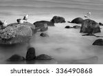 Birds Standing On The Rocks In...