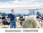 A Male Farmer Feeding Cows Hay