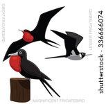 Bird Frigatebird Set Cartoon...