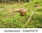 Close Up View Of  Mushroom On...