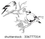 contour drawing of bullfinches... | Shutterstock .eps vector #336777314