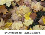 leaves in autumn | Shutterstock . vector #336782096
