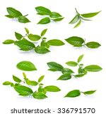 green tea leaf isolated on... | Shutterstock . vector #336791570