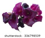 Bunch Of Fresh Violet Calla...