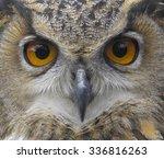 european eagle owl. eurasian... | Shutterstock . vector #336816263