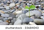 the young lemon which has been... | Shutterstock . vector #33684043
