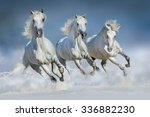Stock photo group of beautiful arabian horses run gallop in snow winter field 336882230