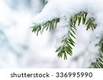 Fir Twig Covered With Snow