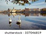 Swans On The River Vltava In...