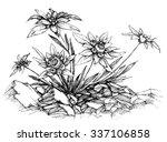 edelweiss etch | Shutterstock .eps vector #337106858