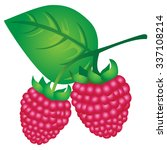 raspberry | Shutterstock .eps vector #337108214