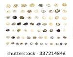 collection of seashells... | Shutterstock . vector #337214846