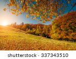 majestic trees with sunny beams ... | Shutterstock . vector #337343510
