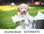 Stock photo adorable cute young puppy outside in the yard taking a bath covered in soapy bubbles 337346573