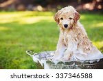 adorable cute young puppy... | Shutterstock . vector #337346588