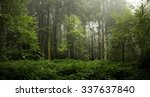 panoramic in the woods with a... | Shutterstock . vector #337637840