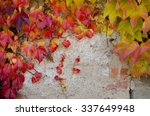 climbing plant with colored... | Shutterstock . vector #337649948