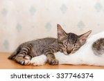 Green Gray Striped Kitten Baby...