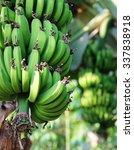 Fair Trade Matoke Bananas On A...