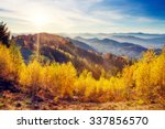 majestic trees with sunny beams ... | Shutterstock . vector #337856570