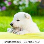 White Swiss Shepherd S Puppy...