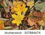 Colorful Autumn Leaves On The...