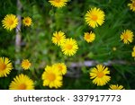 spring background with... | Shutterstock . vector #337917773
