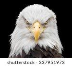Frontal Portrait Of Bald Eagle