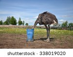 The Comic Image Of The Ostrich...