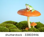 White Lipped Tree Frog On A...