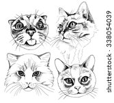 The Image Portraits Of A Cat....