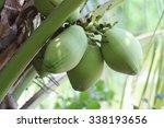 coconut tree in thailand | Shutterstock . vector #338193656