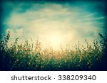 field of sunhemp flower under... | Shutterstock . vector #338209340