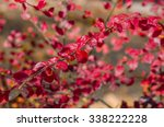 red leaves in late fall on the... | Shutterstock . vector #338222228