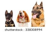 Portrait Of Three Dogs  Closeu...
