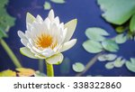 The White Lotus Flower On Gree...