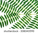 green leaf on white background. | Shutterstock . vector #338343590